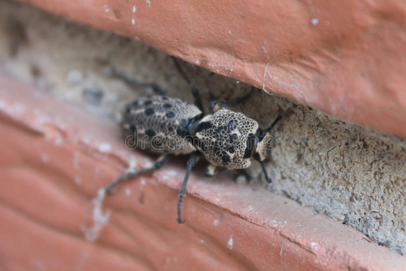 Bizar Insect royalty-vrije stock foto's