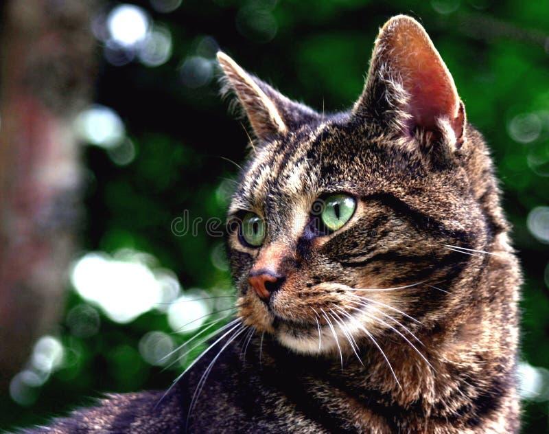 Bizarre mon chat photos libres de droits