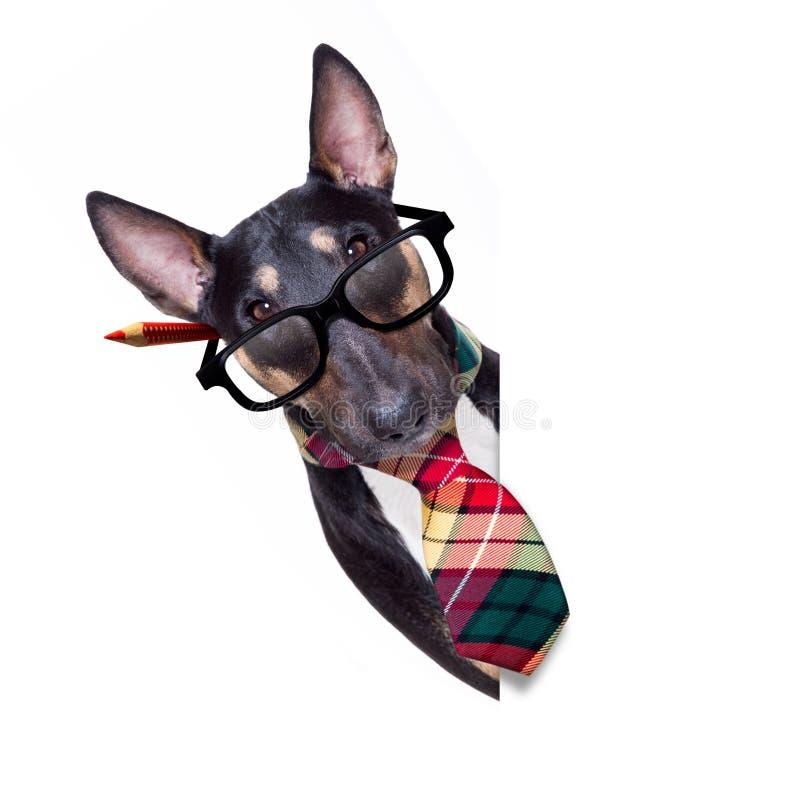 Biznesowy szefa pies obraz royalty free