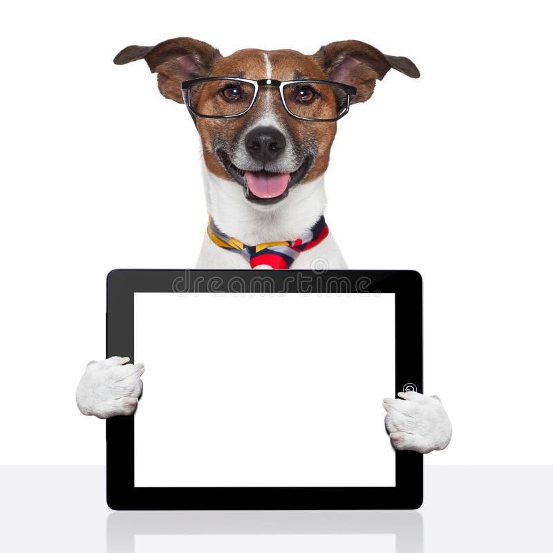 Biznesu psa pastylki komputeru osobisty ebook dotyka ochraniacz obrazy stock