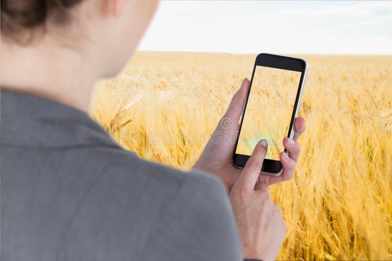 Bizneswomanu smartphone wzruszający ekran przeciw pszenicznego pola tłu obraz stock