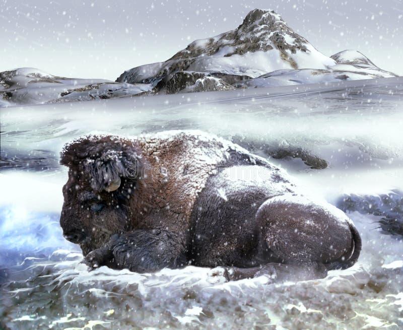 bizonu śnieg royalty ilustracja