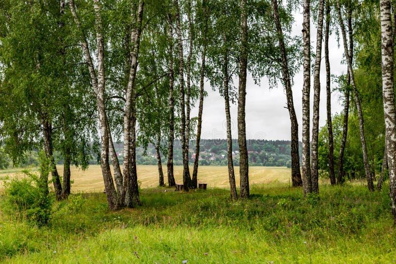 Björkdunge på gränsen av fält, molnig sommardag i natur royaltyfri fotografi