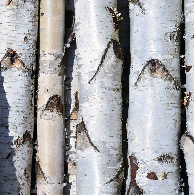 Björkträdstammar, hög av björkjournaler arkivfoton