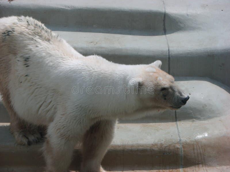 björn 2 med royaltyfri foto
