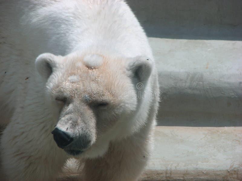 björn 3 med royaltyfria bilder