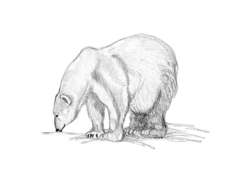 björn som tecknar polart sniffa vektor illustrationer
