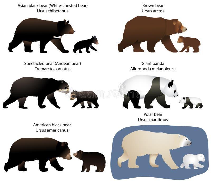 Björnar och björn-gröngölingar vektor illustrationer