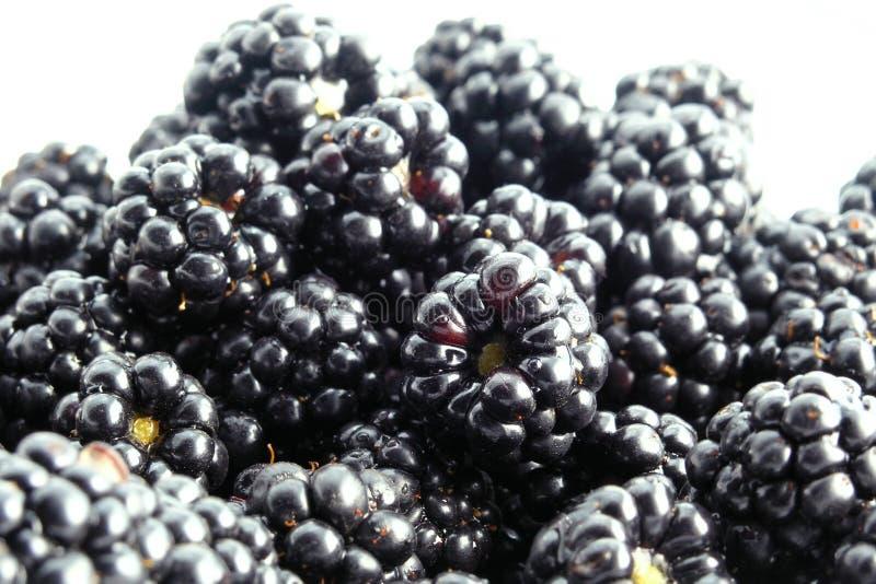Download Björnbär arkivfoto. Bild av frukter, öken, matar, frukt - 245942
