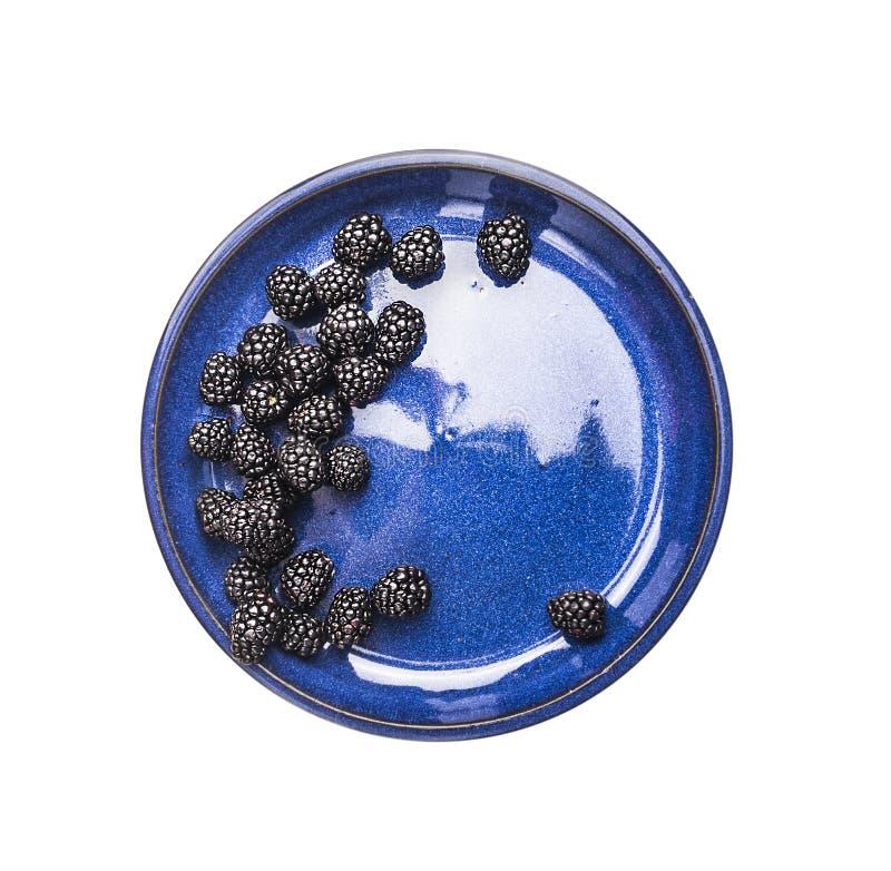 Björnbär i blått bowlar, den bästa sikten som isoleras på vit arkivbild