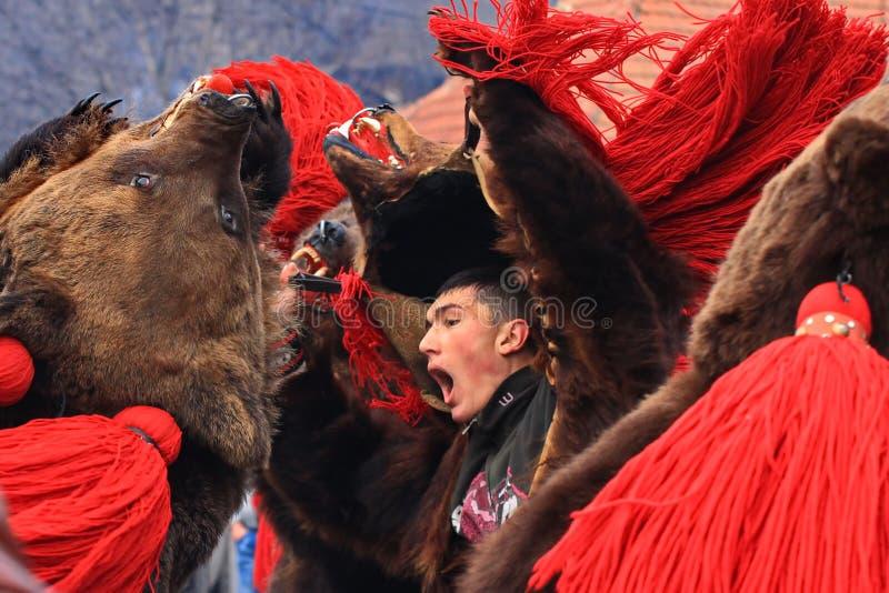Björndansen ståtar 2 fotografering för bildbyråer