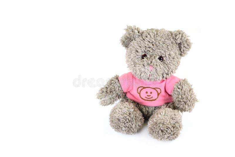 björnen isolerade nallewhite royaltyfria bilder