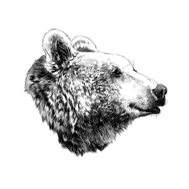 Björnen skissar vektordiagram stock illustrationer