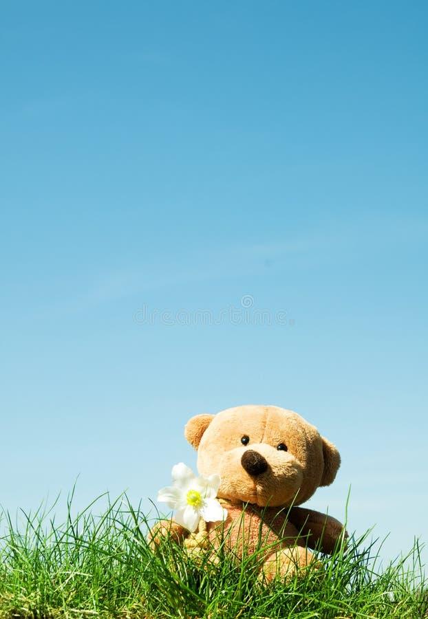 björngräsnalle royaltyfri fotografi