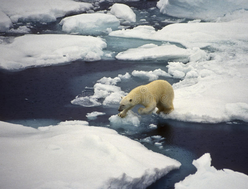 björnis polara svalbard