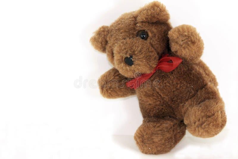 björnnalle royaltyfria foton
