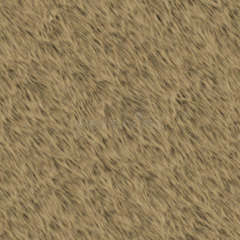 Björnpäls Arkivfoto