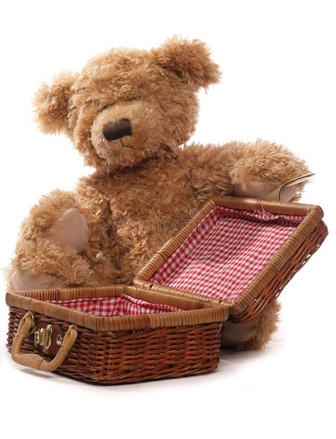 björnpicknicknalle royaltyfri fotografi