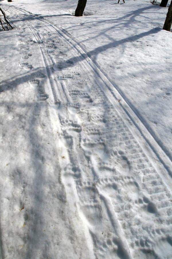 Björnväg Spår av en snö för björn på våren royaltyfria foton