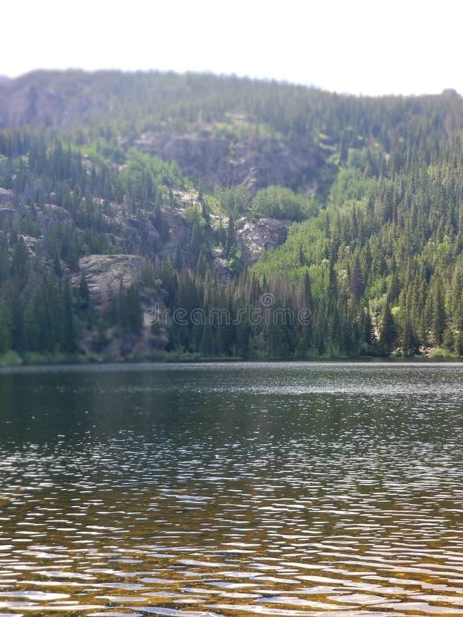 bj?rncolorado lake royaltyfri foto