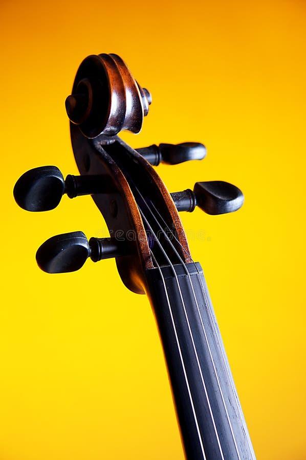 bk zbliżenia ślimacznicy skrzypce kolor żółty fotografia stock