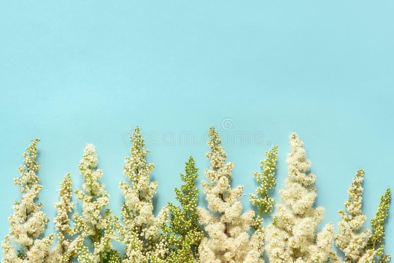 Blühende weiße Blumen des Zweigs der Reihe auf blauem Papierkonzepthallo Frühling Draufsicht des hintergrundes Ebene gelegtem ode stockbilder