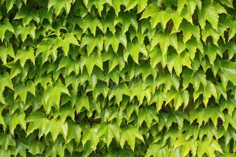 Blätter fotografie stock