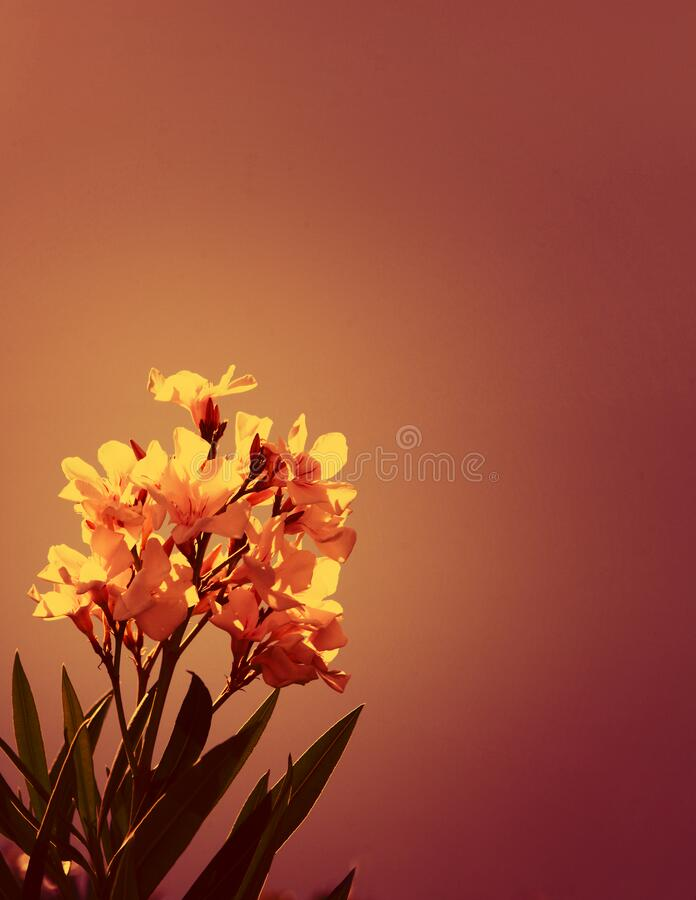 Bläckfärgat mjukt, fokuserat blomträd över naturens bakgrund blommor, bläckfilter royaltyfria foton