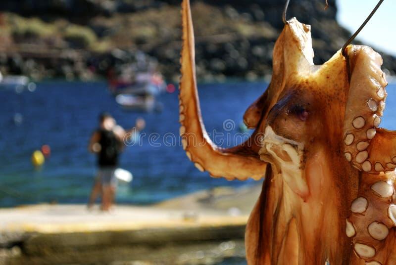 Bläckfisk i Grekland royaltyfri fotografi