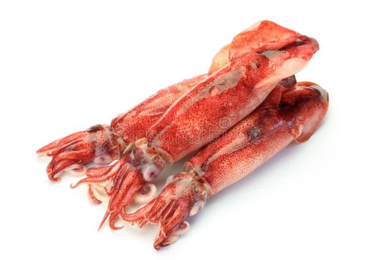 Bläckfisk som jag kokade royaltyfria bilder