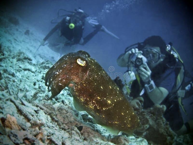 bläckfisksyn fotografering för bildbyråer