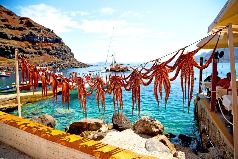 bläckfiskuttorkning i den Grekland santorinien och ljus royaltyfri fotografi