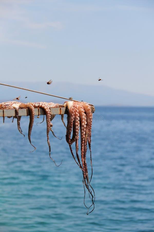 Bläckfiskuttorkning på solen i den Chios ön arkivfoto