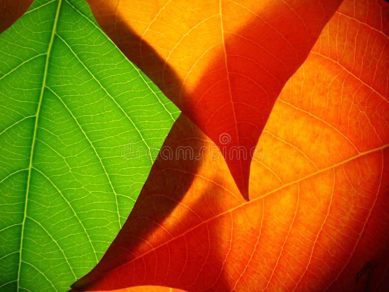 Blätter 002 lizenzfreie stockfotos