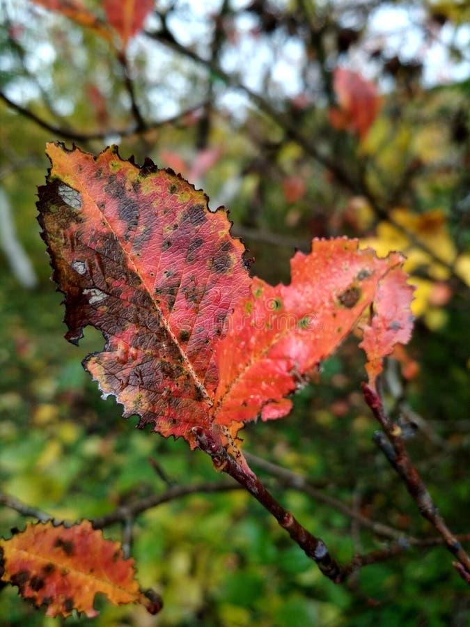 Blätter lizenzfreies stockfoto