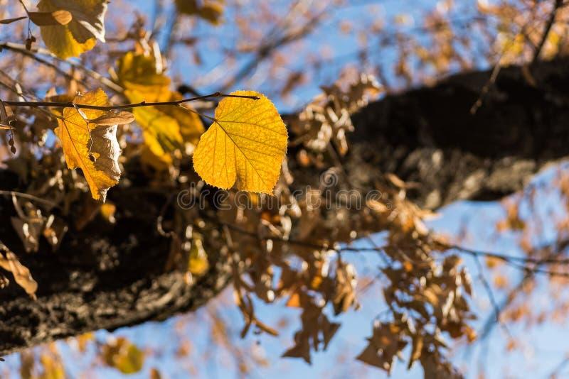 Blätter auf Baum an Herbst beatifull lizenzfreies stockfoto