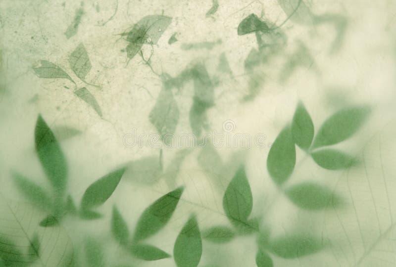 Blätter auf Blättern stockbild