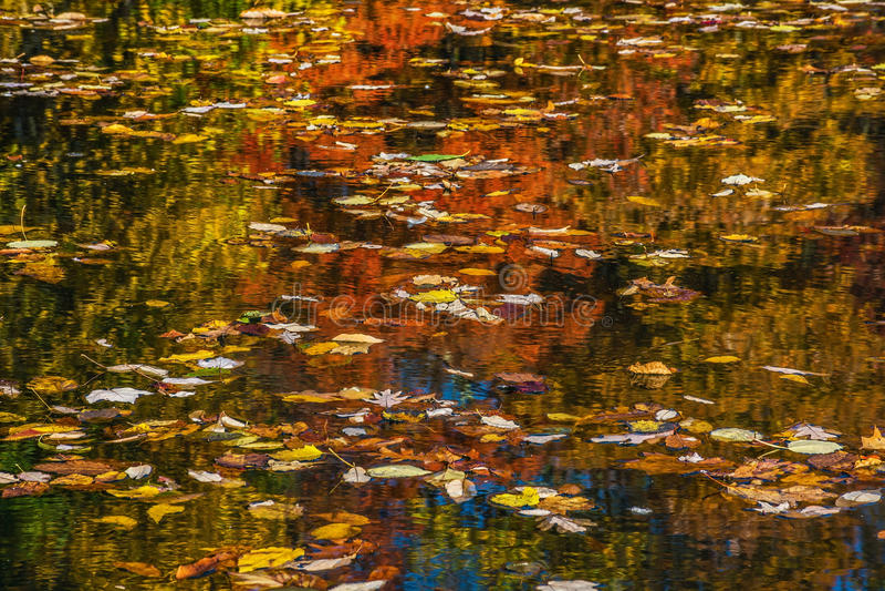 Blätter auf dem See stockfoto