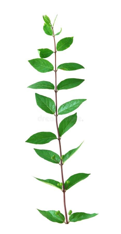 Blätter auf dem Stamm stockfoto