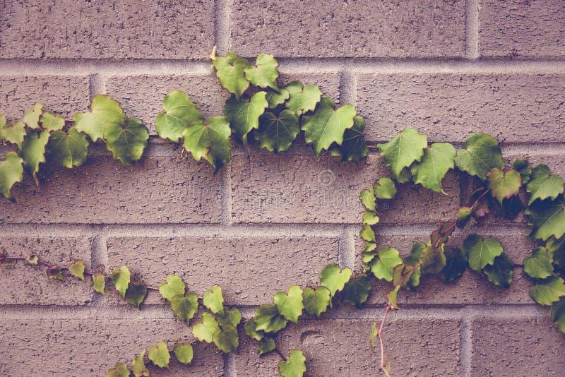 Blätter auf der Wand stockfotos