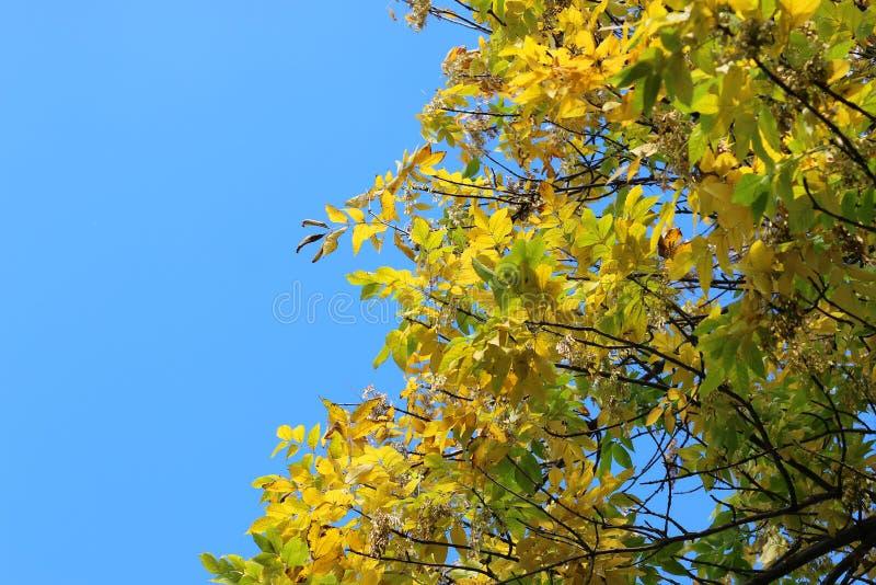 Blätter auf Himmelhintergrund stockfotos
