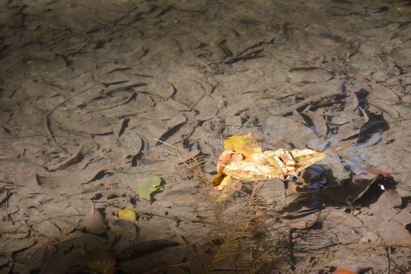 Blätter auf klarem Wasser lizenzfreie stockbilder