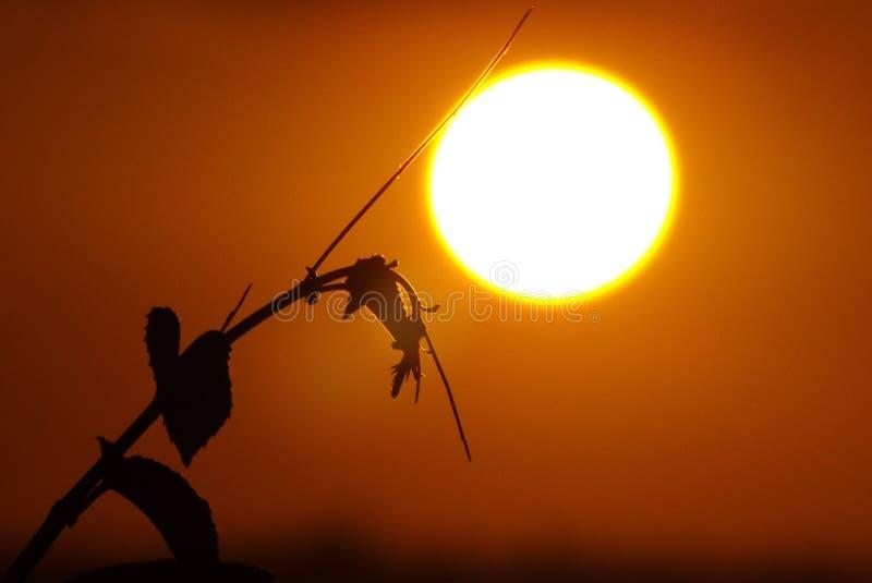 Blätter auf Sonnenunterganghintergrund stockbild