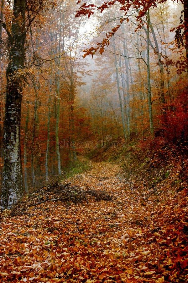 Blätter bedeckten Weg im Wald lizenzfreies stockbild