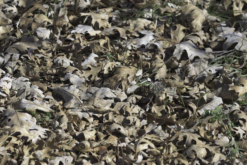Blätter am Boden lizenzfreies stockfoto
