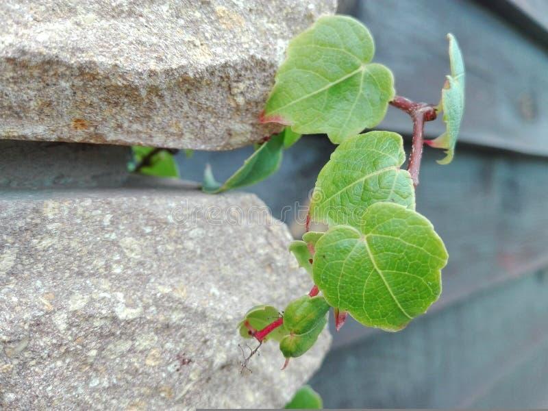 Blätter in den Ziegelsteinen stockbilder