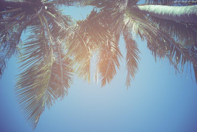 Blätter der Kokosnuss auf einem Hintergrund des blauen Himmels, Weinlesefilter lizenzfreies stockbild