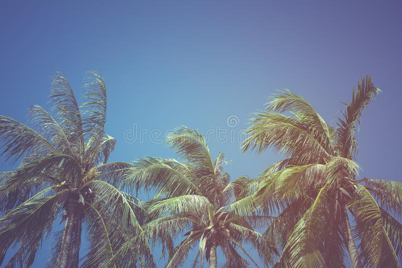 Blätter der Kokosnuss auf einem Hintergrund des blauen Himmels, Weinlesefilter stockfotos