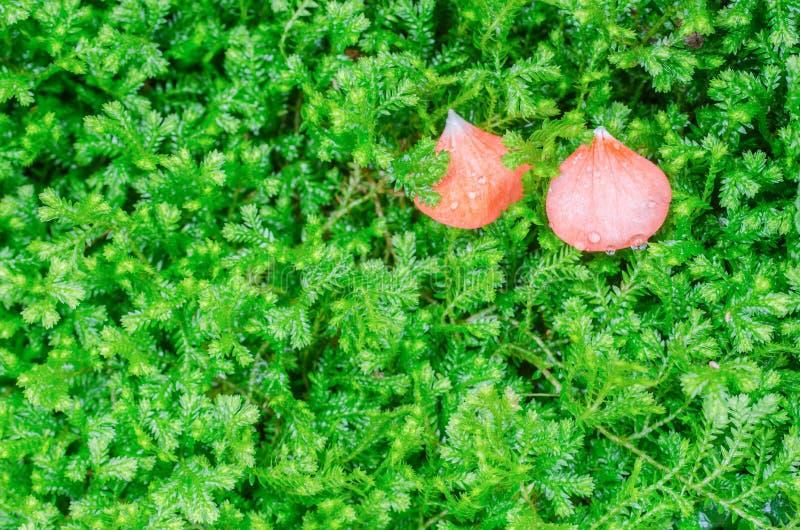 Blätter der roten Blume stockfotografie