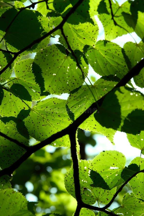 Blätter in der Sonne lizenzfreie stockfotos